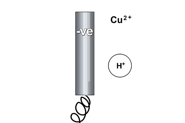Rule one says copper will form at the cathode because copper is less reactive than hydrogen