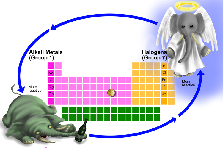 In the halogen group the more reactive elements are at the top where in alkaline metals group are displayed at the bottom