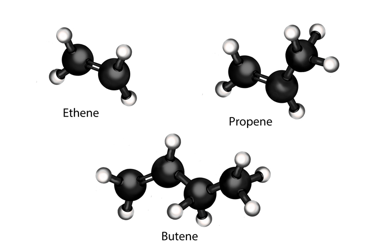 Alkenes rather than alkanes are carbon molecules where there atoms are double bonded these form during a process called cracking