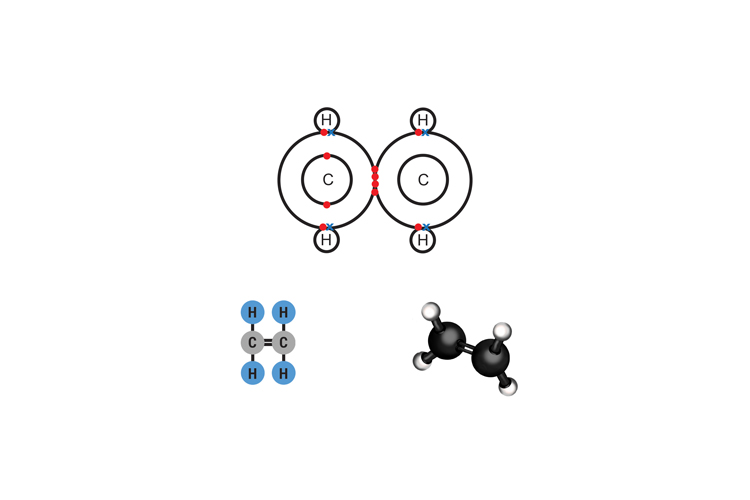 Ethenes molecular structure has 2 carbon atoms and 4 hydrogens (Methene does not exist as there is only one carbon atom but needs a double carbon bond)