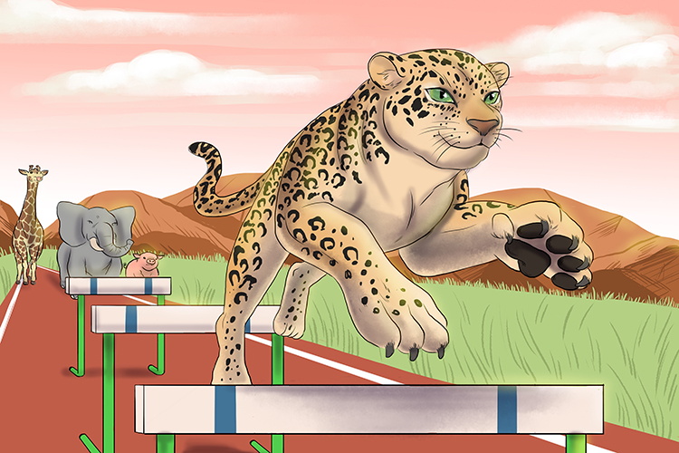 Because they were so good at leaping, the leopards were always way ahead in the animal Olympics hurdles event.