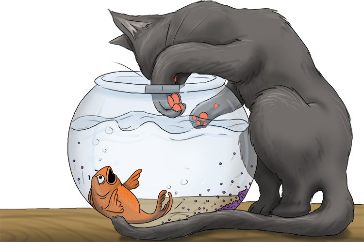 It was very troubling for the goldfish when the cat got her paw into the bowl.