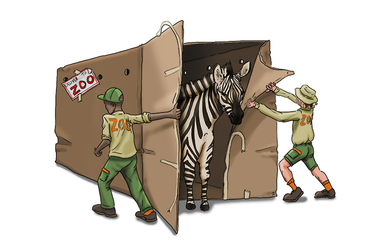 When they broke the seal (zeal) on the box, they found they'd been sent a new zebra!
