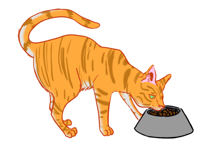 The cat possesses a dish