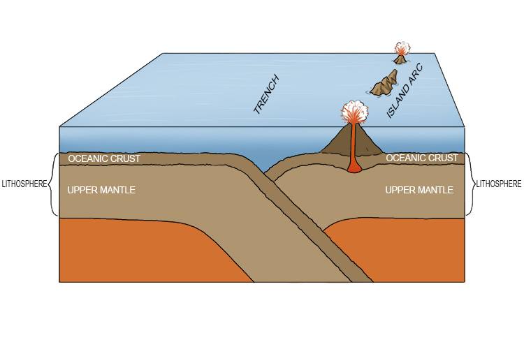 When two thin oceanic crusts converge (called destructive plate margin) the denser crust will subduct.