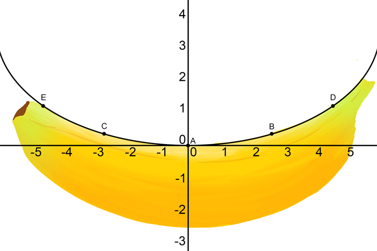 Bananas are shaped like parabolas