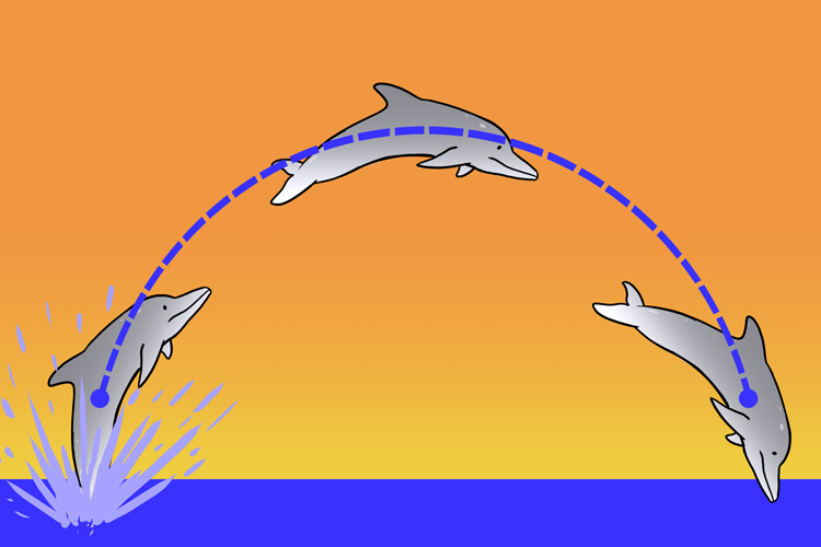 When dolphins jump out of the water they follow a parabola path