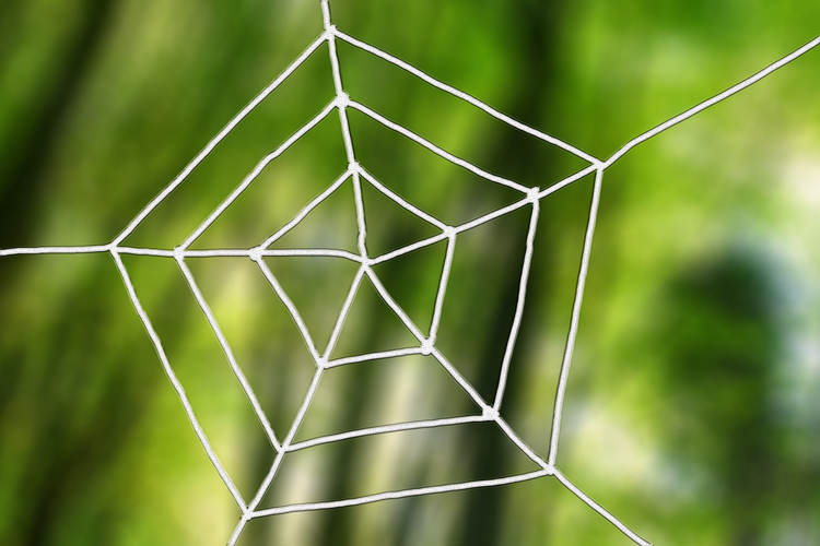 Spiders spin webs in a pentagon