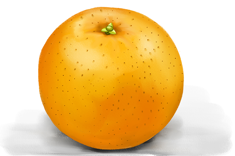 To find a surface area of a sphere take an orange