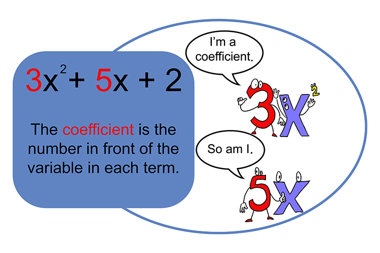 Coefficient numbers are always shown in front of a variable