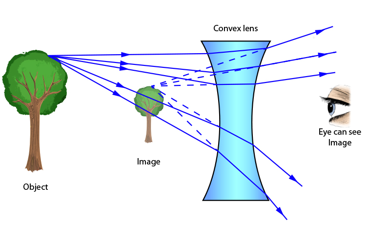 Rays from the top of a tree give the eye the impression the tree is shorter when viewed through a concave lens
