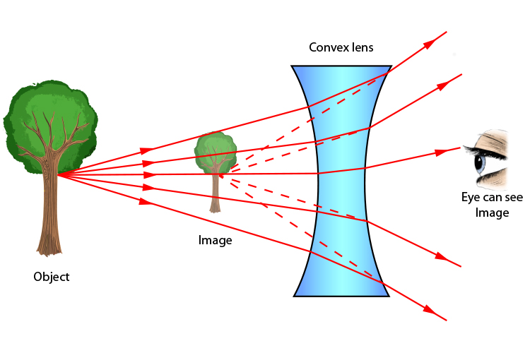 Rays from the middle of a tree give the eye the impression the tree is smaller when viewed through a concave lens