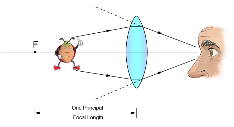 Ray diagram of a bug between one principal focal length and a convex lens