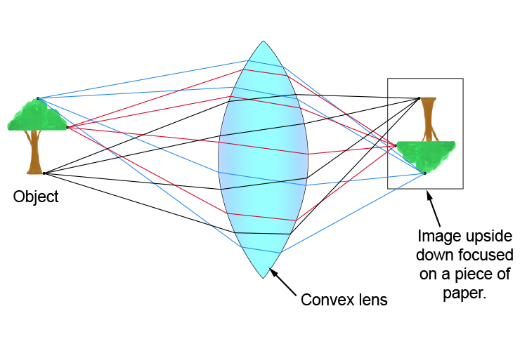Numerous rays from many points on an object focused by a convex lens to form an upside down image