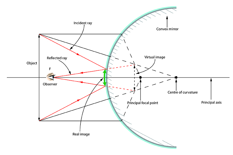 Ray diagram with the object passing through the principal axis and the incident and reflected ray included