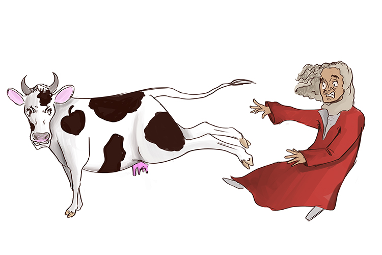 The cow kicks Sir Issac Newton back with an equal and opposite force.