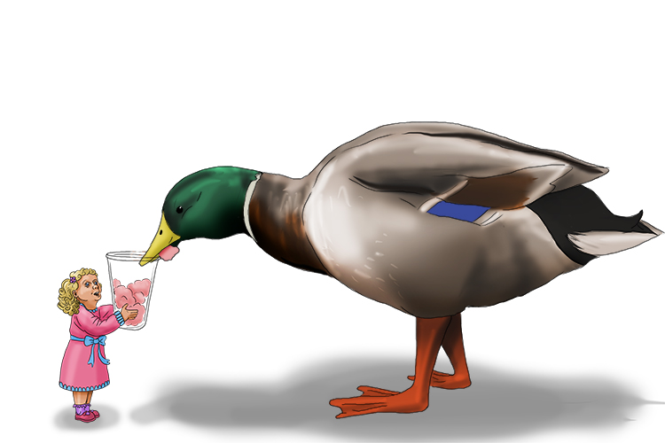 She needed to fill more (Fillmore) of the container because she had a giant mallard (Millard) duck to feed.