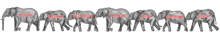 Imagine seven different elephants – one for each day of the week.