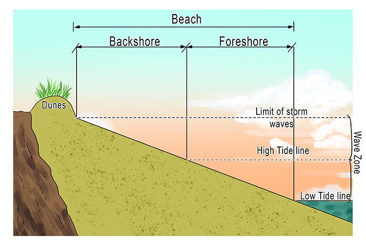 Beach backshore/foreshore diagram geography.