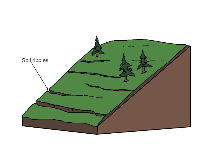 The soil may move less than a centimetre a year, but over time the results can be seen in small, step-like terraces on hillsides.