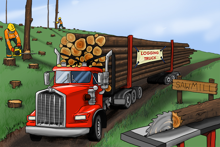 Logging is the process of cutting down trees and moving the logs from the forest to the sawmills.