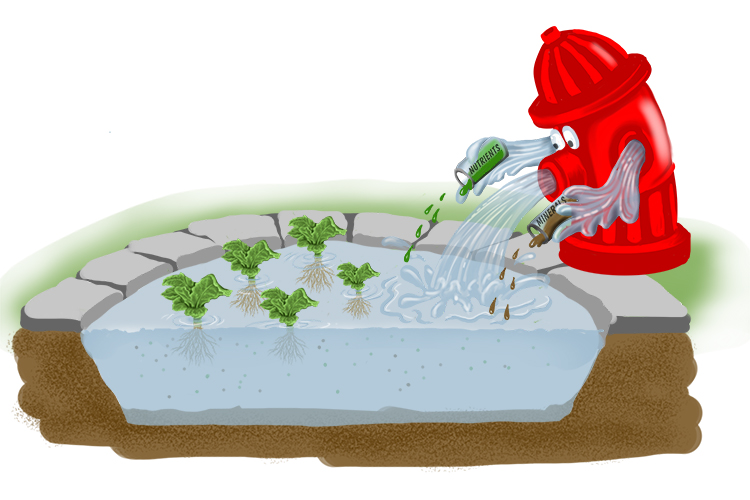 The hydrant fed a pond that gave a tonic (hydroponic) to the plants of minerals and nutrients in solution.