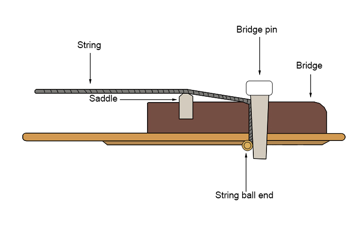 This drawing shows how the bridge pin holds the string into the bridge.