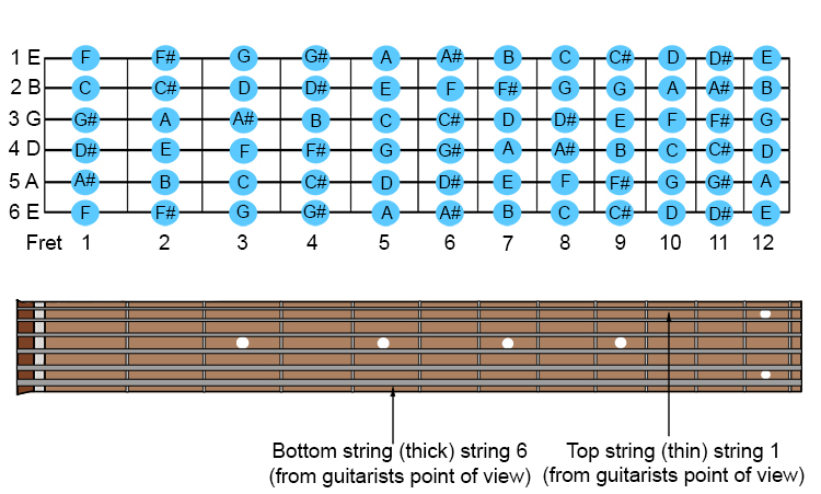 We will now show you more clearly in greater detail the notes on these first 12 frets: