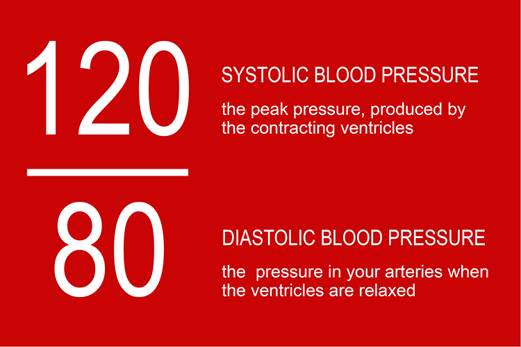 Infographic showing the systolic, when the ventricles contract and diastolic when ventricles relax
