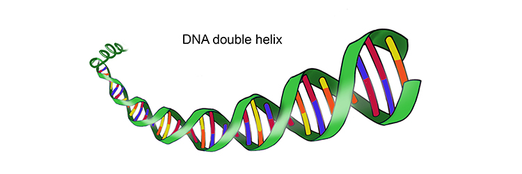 Image of the DNA double helix