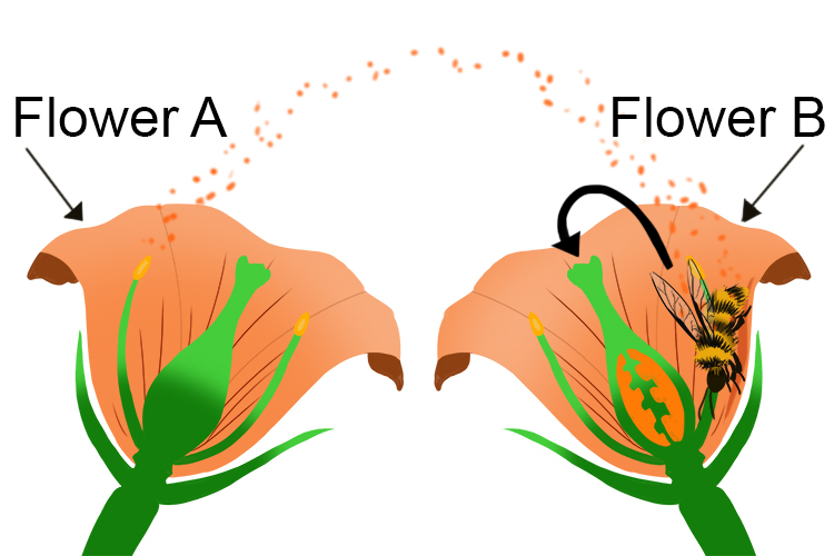 Pollen can be sent to similar flowers by wind or sticking to bees that fly from flower to flower