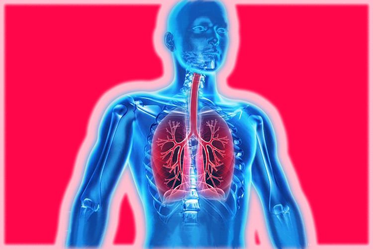 Image of a humans respiratory system