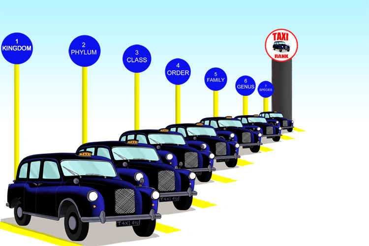 Mnemonic to show the seven characteristics of taxonomy through taxi ranks.