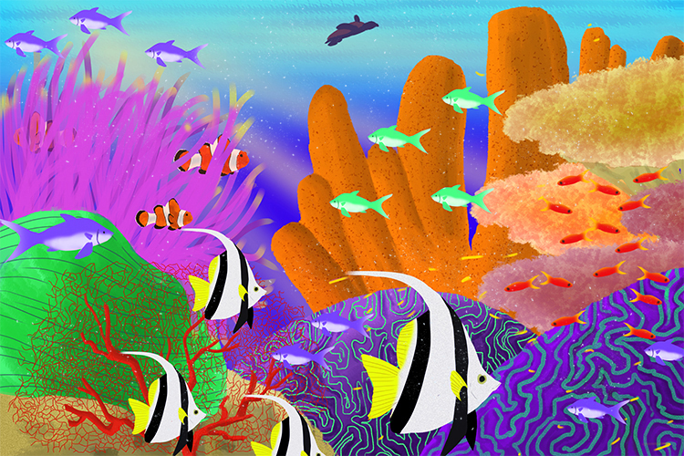 Biodiversity is the number of species in an ecosystem in a coral reef there is a huge diversity of species