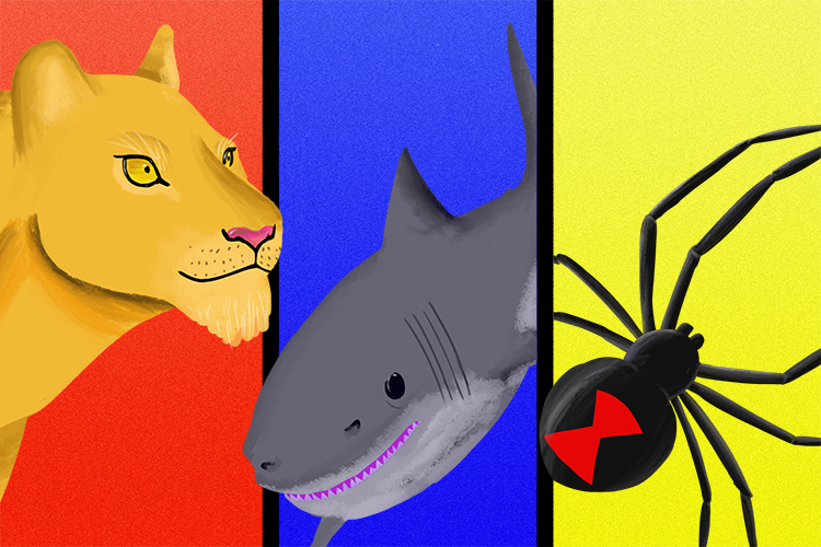 Examples of predators could be Lions, sharks and spiders as they can be intelligent fast and agile