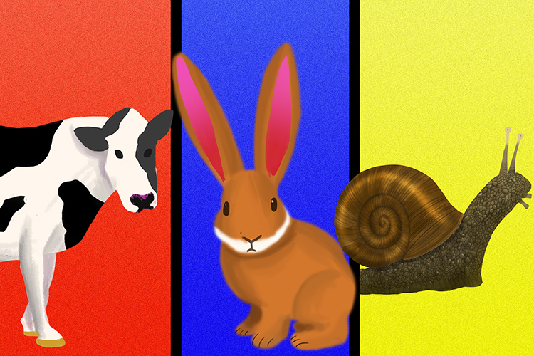 Examples of herbivores are cows, rabbits and snails that only eat vegetation
