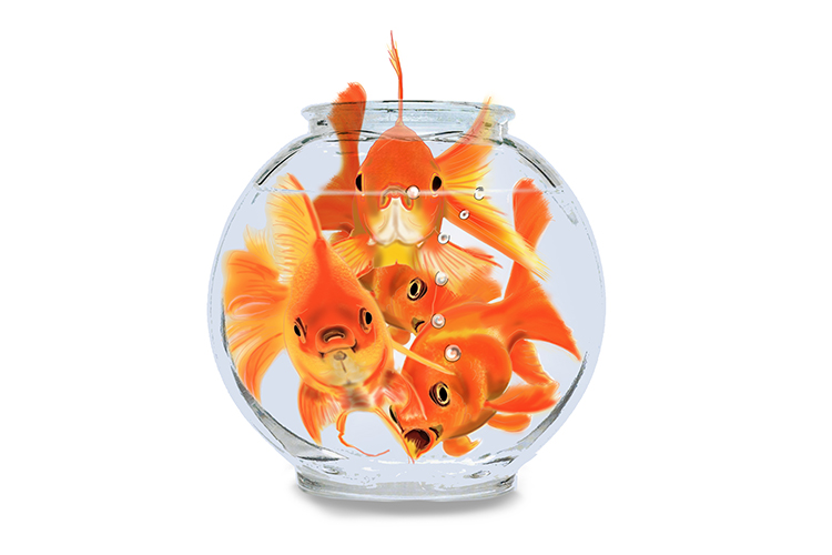 If 4 gold fish were in a bowl the population size for that habitat would be 4