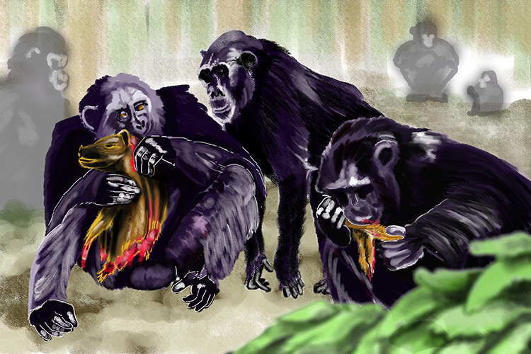Chimpanzees are omnivores preying on deer, small animals and vegetation, they are also known for killing and eating other chimpanzees