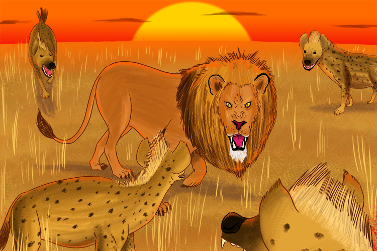 Lions and hyenas compete for food