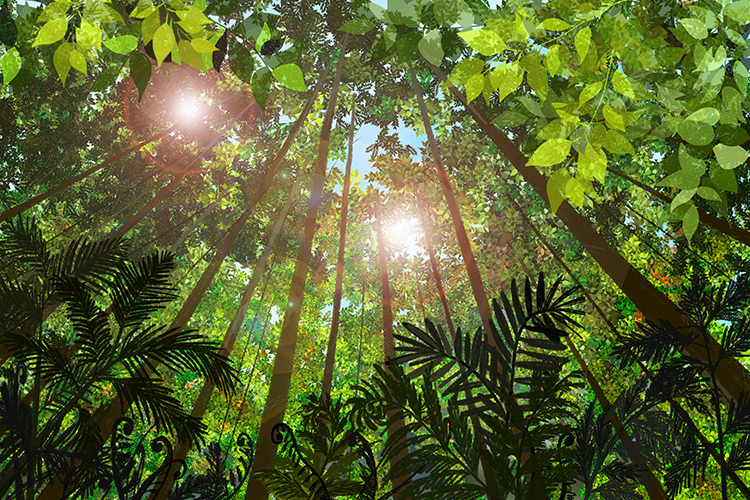 Trees in a  forest interspecific compete for the best sunlight by growing taller than the rest