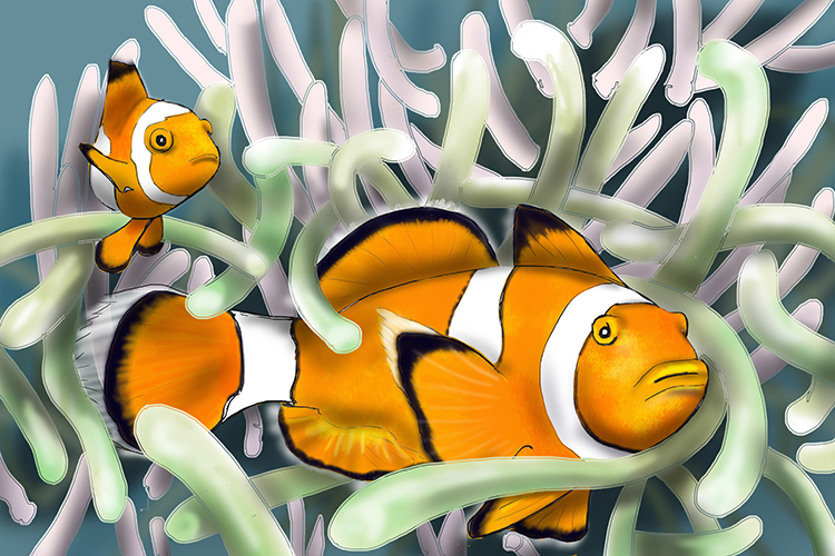 Sea anemone the host and clown fish have a symbiotic relationship the fish eats parasites that could harm the anemone but it gives the clown fish a safe environment to live