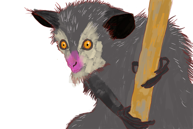 An aye-aye has elongated fingers to detect grubs and bugs
