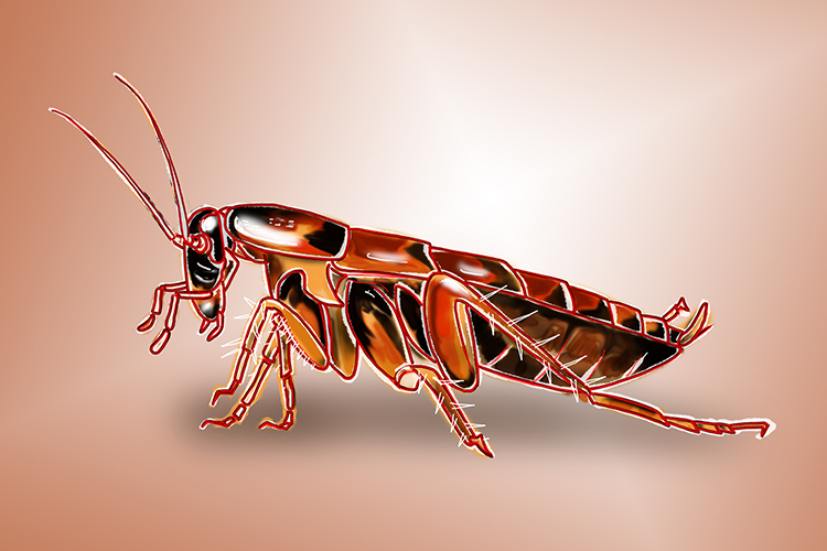 Cockroaches and other generalists are able to live in places of wide temperature ranges