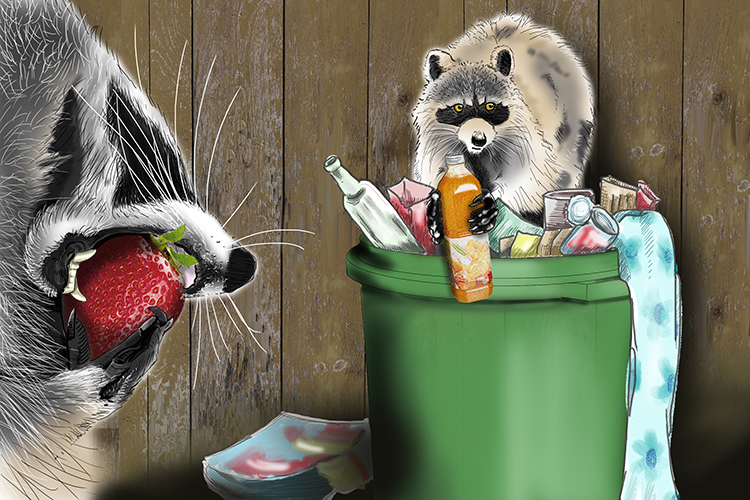 Raccoons and pigeons have become generalists at they have adapted to live in urban areas