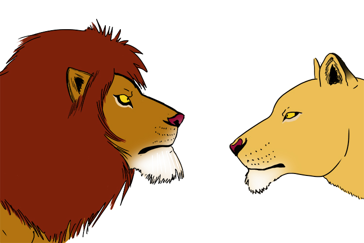 Female and male lions look different