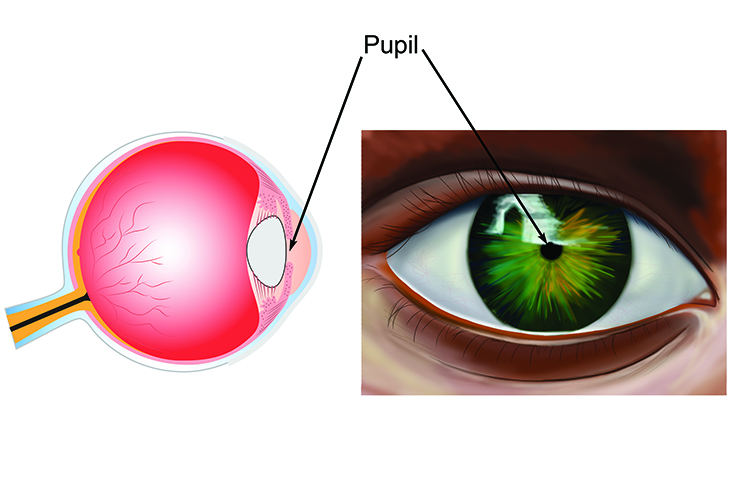 Front and side view of the pupil the hole directing light