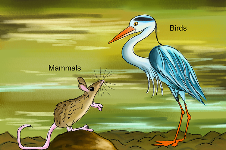 Image of mammals and birds as warm blooded categories of vertebrates