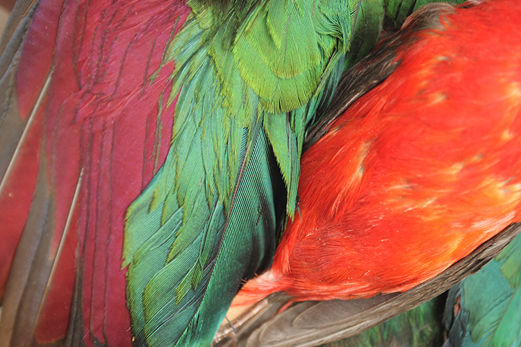 A picture showing feathers belongs to the sub category birds as one of the five