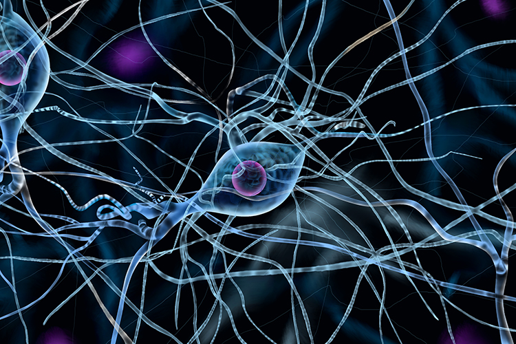 There are 100 billion relay neurones in the body most of them are found in the brain, where it can learn or memories what is being transmitted
