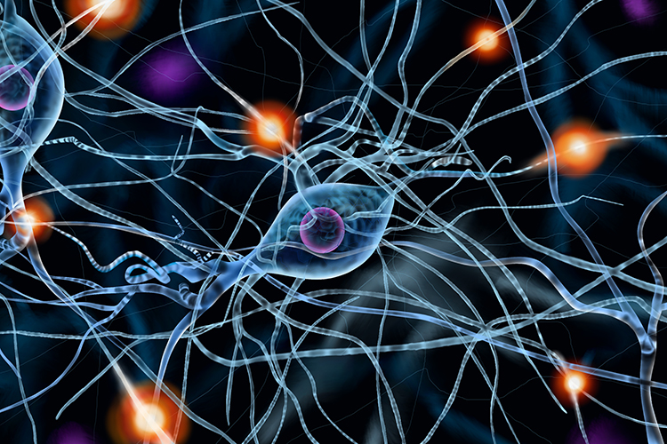 Graphic showing impulses traveling down axons of neurone cells